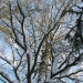 zima_39