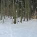 zima_40