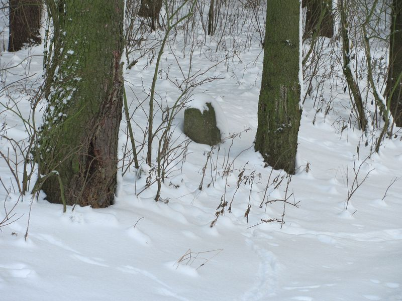 zima_41